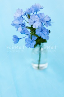 Fair Trade Photo Blue, Colour image, Fathers day, Flowers, Glass, Love, Marriage, Mothers day, Peru, Sorry, South America, Thank you, Valentines day, Vertical, Wedding