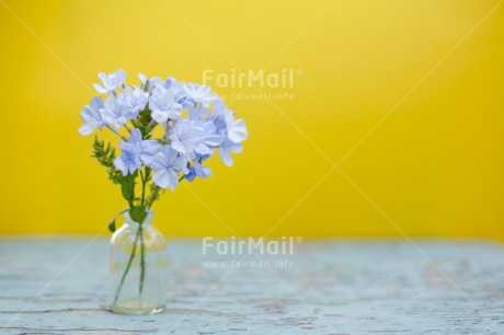 Fair Trade Photo Blue, Colour image, Contrast, Fathers day, Flowers, Glass, Horizontal, Love, Marriage, Mothers day, Peru, Sorry, South America, Thank you, Valentines day, Wedding, Yellow