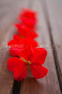 Fair Trade Photo Colour image, Contrast, Fathers day, Flowers, Love, Marriage, Mothers day, Peru, Red, Sorry, South America, Thank you, Valentines day, Vertical, Wedding, Wood