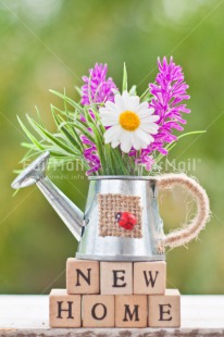 Fair Trade Photo Colour image, Daisy, Flower, Home, Letters, Moving, New home, Peru, South America, Text, Vertical, Water, Watering can, Welcome home