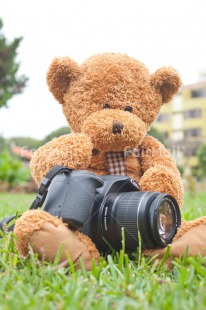 Fair Trade Photo Animals, Bear, Birthday, Camera, Colour image, Friendship, Grass, Green, Outdoor, Peluche, Peru, South America, Teddybear, Thinking of you