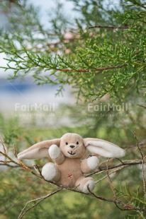 Fair Trade Photo Birth, Birthday, Chachapoyas, Colour image, Friendship, Nature, New baby, Peluche, Peru, South America, Thinking of you, Tree, Vertical