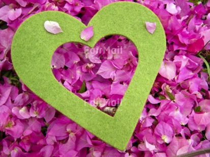 Fair Trade Photo Colour image, Flower, Green, Heart, Horizontal, Love, Peru, Pink, South America, Valentines day