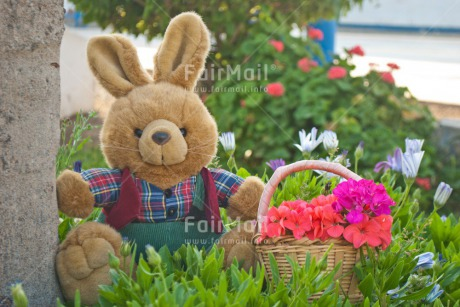 Fair Trade Photo Animals, Birthday, Bucket, Colour image, Congratulations, Flower, Friendship, Get well soon, Grass, Green, Love, Mothers day, Outdoor, Peluche, Peru, Rabbit, Sorry, South America, Thinking of you, Valentines day