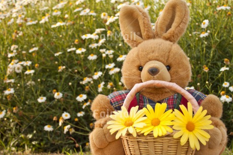 Fair Trade Photo Animals, Birthday, Bucket, Colour image, Congratulations, Flower, Friendship, Get well soon, Grass, Green, Love, Mothers day, Outdoor, Peluche, Peru, Rabbit, Sorry, South America, Thinking of you, Valentines day, Yellow
