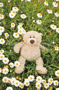 Fair Trade Photo Animals, Bear, Birthday, Colour image, Congratulations, Daisy, Flower, Friendship, Get well soon, Grass, Green, Love, Mothers day, Outdoor, Peluche, Peru, Sorry, South America, Teddybear, Thinking of you, Valentines day