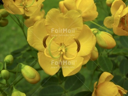 Fair Trade Photo Closeup, Colour image, Day, Flower, Green, Horizontal, Nature, Outdoor, Peru, Seasons, South America, Summer, Yellow