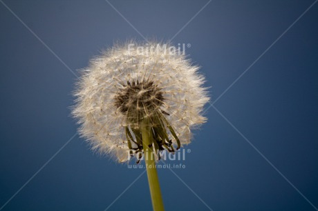 Fair Trade Photo Condolence/Sympathy, Flower, Good luck, Horizontal, Sky, Thinking of you