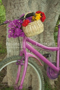 Fair Trade Photo Basket, Bicycle, Closeup, Colour image, Day, Flower, Mothers day, Outdoor, Peru, Purple, South America, Summer, Transport, Tree, Valentines day, Vertical