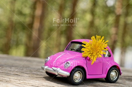 Fair Trade Photo Activity, Car, Chachapoyas, Colour image, Flower, Get well soon, Holiday, Horizontal, Landscape, Moving, New Job, New beginning, New home, On the road, Peru, Pink, Sign, South America, Thinking of you, Transport, Travel, Travelling, Yellow