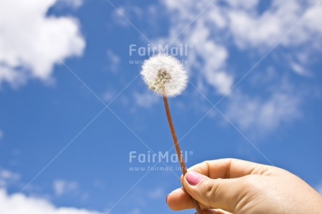 Fair Trade Photo Birthday, Chachapoyas, Clouds, Colour image, Condolence/Sympathy, Flower, Friendship, Get well soon, Green, Hand, Horizontal, Love, Mothers day, Peru, Sky, Sorry, South America, Valentines day, White