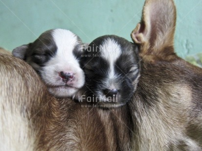 Fair Trade Photo Activity, Animals, Birth, Closeup, Colour image, Cute, Day, Dog, Family, Horizontal, Indoor, Mother, New baby, Peru, Sleeping, South America