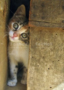 Fair Trade Photo Animals, Baby, Cat, Colour image, Cute, Day, Funny, Outdoor, People, Peru, South America, Vertical, Young