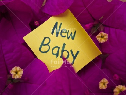 Fair Trade Photo Birth, Closeup, Colour image, Flower, Horizontal, Letter, New baby, Peru, Pink, South America, Tabletop, Yellow