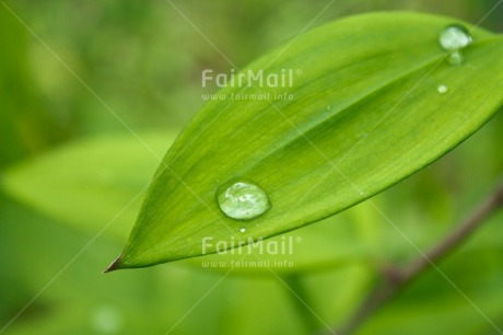 Fair Trade Photo Colour image, Day, Green, Horizontal, Leaf, Nature, Outdoor, Peru, Plant, South America, Spirituality, Tree, Waterdrop