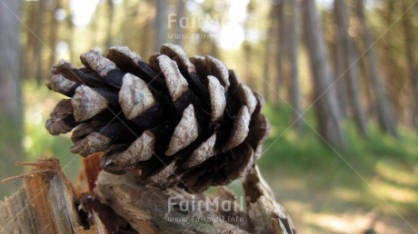 Fair Trade Photo Autumn, Christmas, Closeup, Day, Europe, Forest, Horizontal, Nature, Outdoor, Pine, Seasons