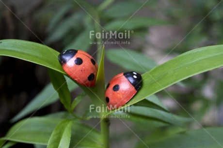 Fair Trade Photo Colour image, Day, Forest, Good luck, Green, Horizontal, Ladybug, Leaf, Nature, Outdoor, Peru, Plant, Red, South America, Tree
