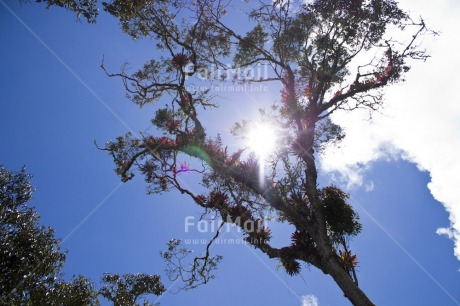 Fair Trade Photo Clouds, Colour image, Condolence/Sympathy, Day, Flower, Horizontal, Light, Low angle view, Nature, Outdoor, Peru, Sky, South America, Spirituality, Sun, Tree