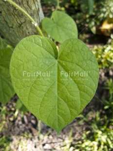 Fair Trade Photo Colour image, Day, Forest, Green, Heart, High angle view, Leaf, Love, Outdoor, Peru, South America, Vertical