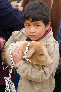 Fair Trade Photo 5 -10 years, Activity, Agriculture, Animals, Day, Latin, Looking at camera, Market, One boy, Outdoor, People, Peru, Pig, South America, Swine, Vertical
