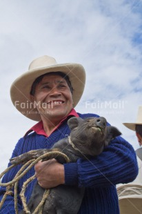 Fair Trade Photo Agriculture, Animals, Care, Day, Ethnic-folklore, Latin, Market, One man, Outdoor, People, Peru, Pig, Smiling, Sombrero, South America, Swine, Vertical