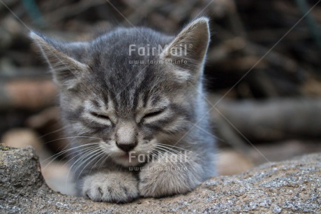 Fair Trade Photo Animals, Cat, Closeup, Colour image, Cute, Horizontal, Kitten, Peru, Relax, South America